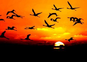 Flamingos of Walvis Bay