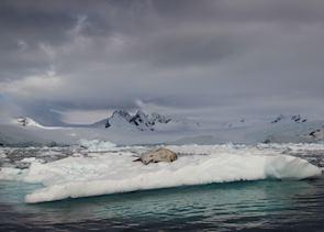 Antarctica, Weddell seal
