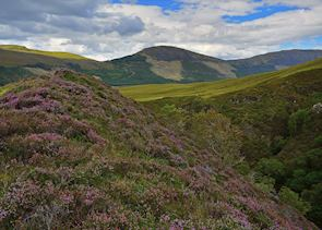 Heather Hills, Isle of Skye