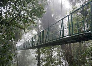 Suspended Bridge at Monteverde, Costa Rica