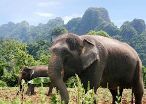 Elephant Experience at Khao Sok National Park
