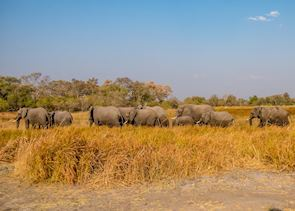 Getting up close with a herd of elephants in Moremi