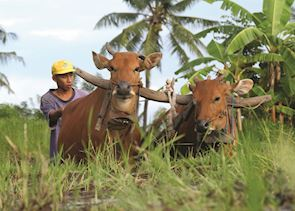 Local farmer in western Bali, Indonesia