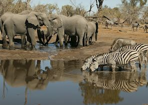 A busy waterhole in the Linyanti Concession
