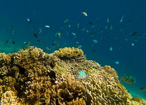 Underwater life in Pemuteran Bay, Indonesia