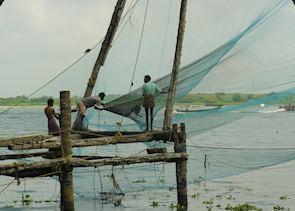 Bringing in the Fish, Cochin, India
