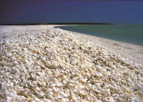 Shell Beach, Coral Bay