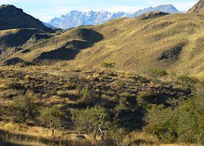 Buzzard-Eagle in Parque Patagonia, Aisen