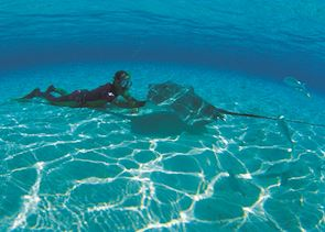Swimming with the sting rays, Moorea