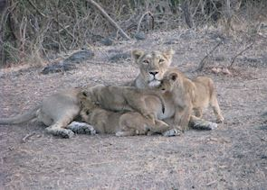 Sasan Gir National Park, India