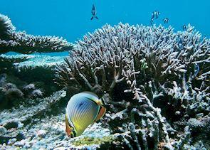 Snorkelling off the Iles des Deux Cocos, Mauritius