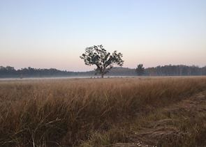 Kanha at sunrise