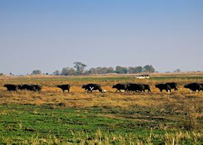 Game viewing on the Busanga Plains, Kafue National Park