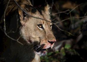 On safari in the Khwai Private Reserve