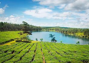 Bois Chéri Tea Plantation, Mauritius