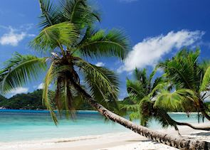 Seychellois Beach