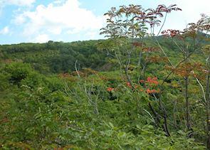 Autumn colours, Asahidake