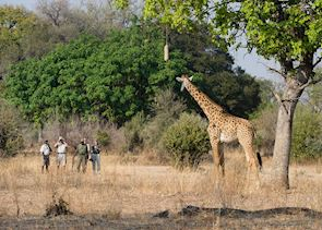 Walking safari in the South Luangwa National Park