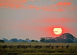 Dawn in the Kafue National Park