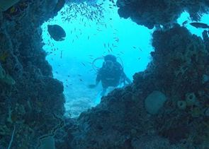 Diving on the Bazaruto reefs