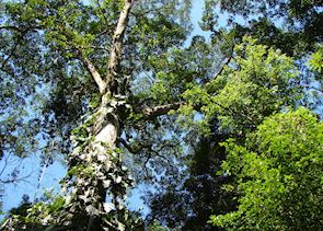 Rainforest, Canopy Tower