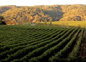 Vineyards in the Sonoma Hills