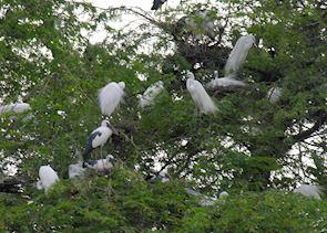 Keoladeo Bird Sanctuary, Bharatpur, India