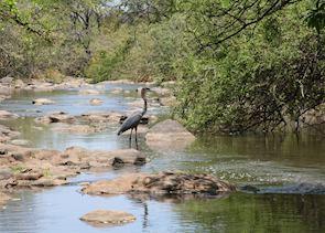 Goliath Heron, Meru National Park