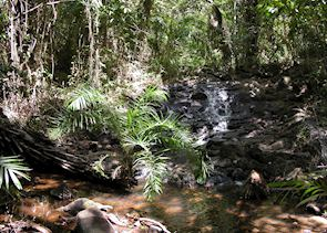 Sapiringha Reserve, Praia do Forte