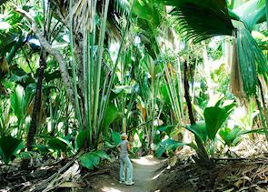 Walking in the Vallee de Mai Forest, Praslin
