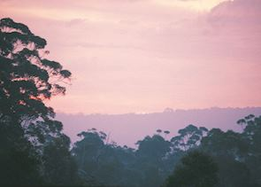 Karri Forest sunset, Pemberton, WA