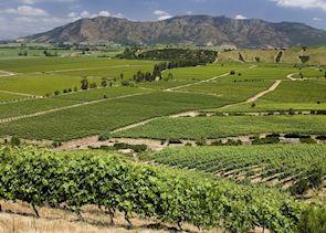Colchagua wine region, Chile
