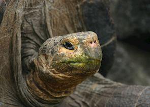 Galapagos Tortoise, Ecuador