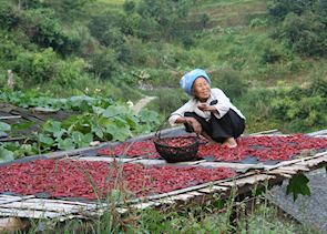 Old woman drying chillies