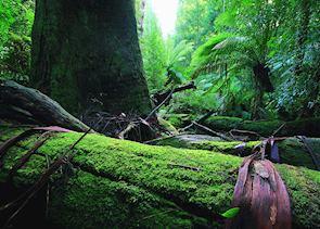 Peppers Bush Adventures, Tasmania