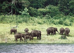 Elephants at Nagarhole National Park
