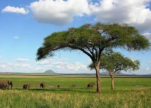 Elephants in Tarangire National Park, Tanzania