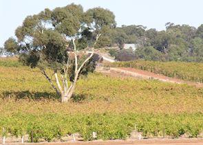 Barossa Valley, Australia