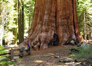 General Sherman, Sequoia National Park