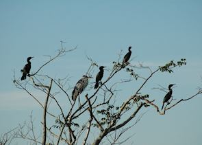 Birdlife in the Pantanal