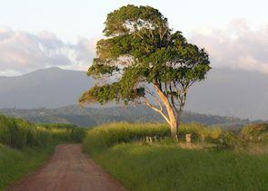 Atherton Tableland's, Australia