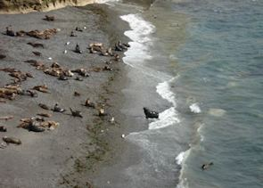 Sea lions at Punta Loma, near Puerto Madryn, Argentina