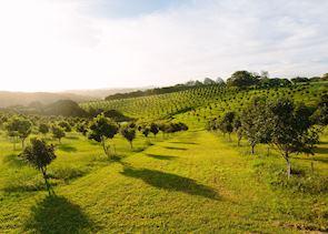 Macadamia Orchard, Byron Bay