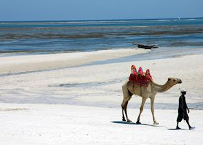 Camel on Diani Beach