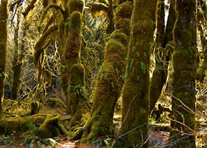 Rainforest in Olympic National Park