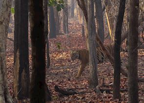 Autumn in Bandhavgarh