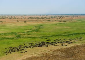 Herd of buffalo in the Kafue National Park