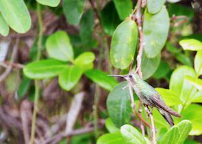 Hummingbird at Cayo Santa Maria