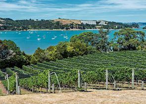 Vineyards on Waiheke Island