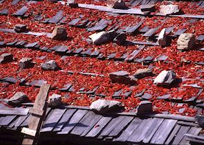 Chillies drying on roof